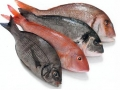 pesce-magro